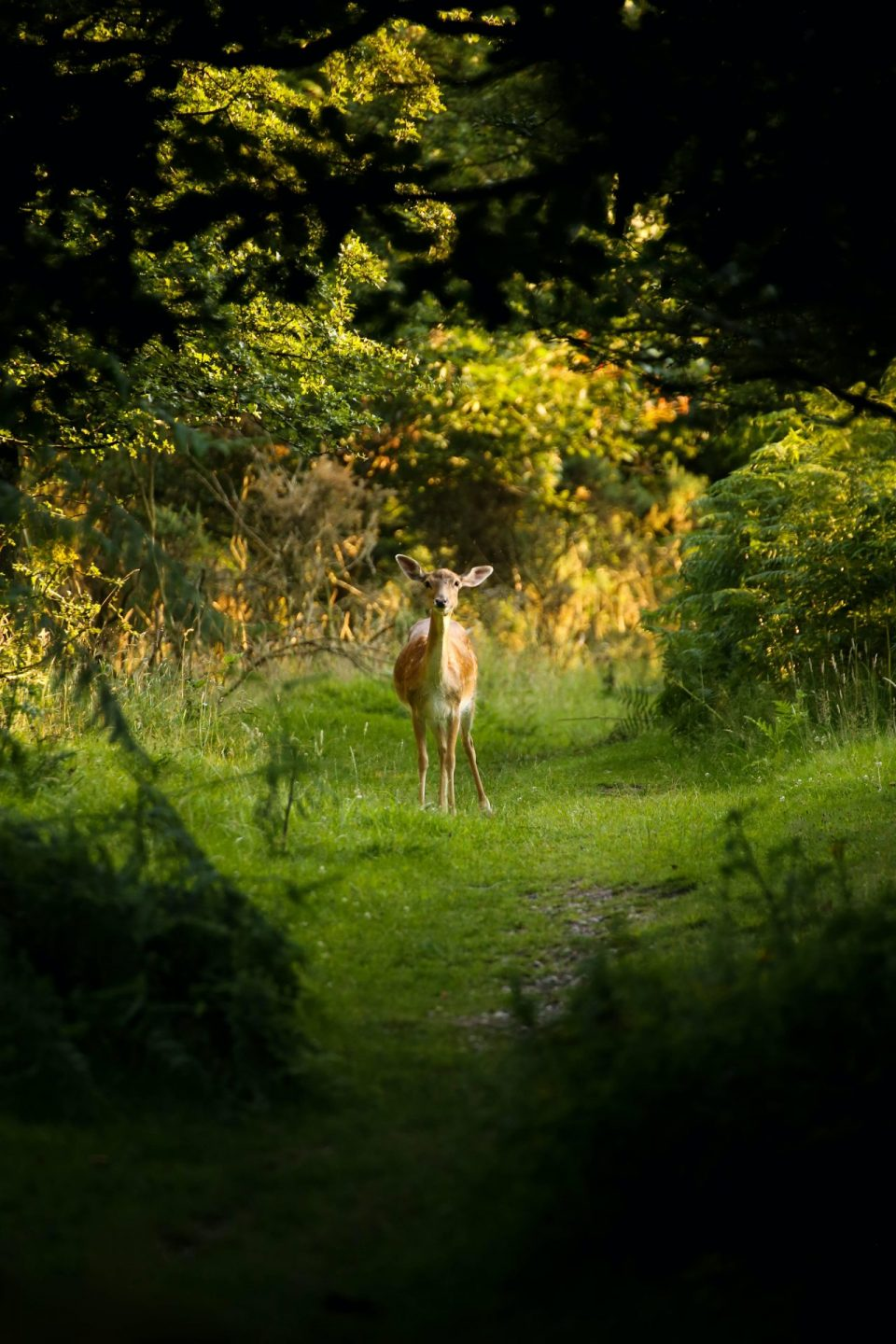 Helping vulnerable people - deer in forest